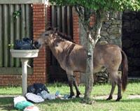 Paard met vuilnis
