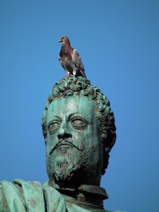 Duif op hoofd van standbeeld - Florence