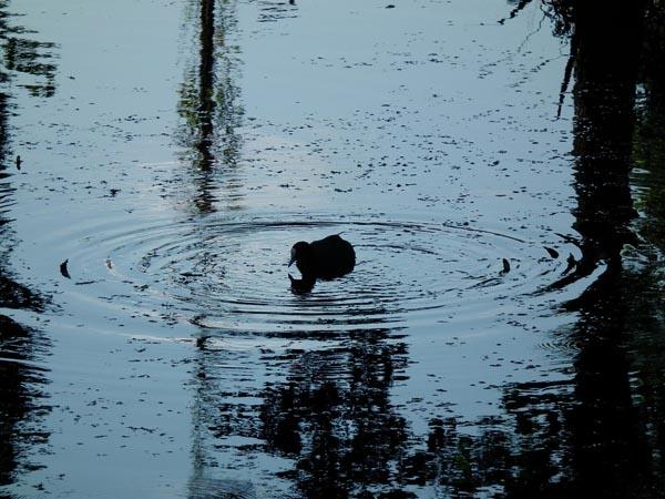 Foto waterkring met vogel