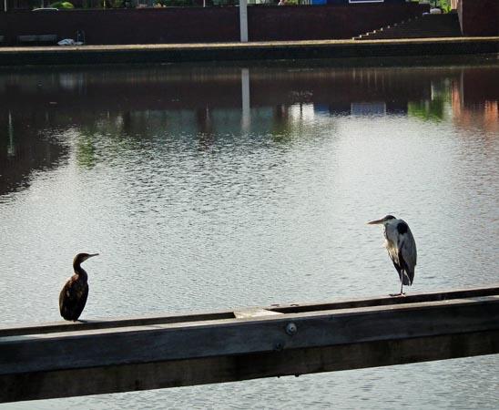 Foto vogels op balk