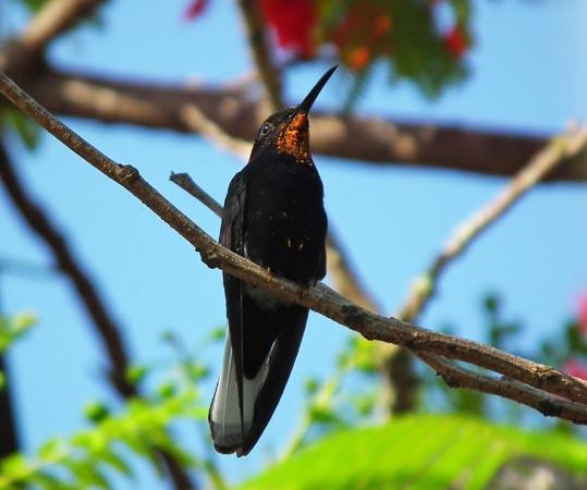 Foto kolibrie