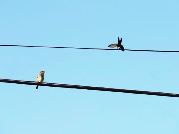 Foto mus en kolibrie