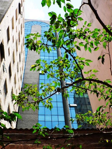 Foto boom tussen hoge gebouwen