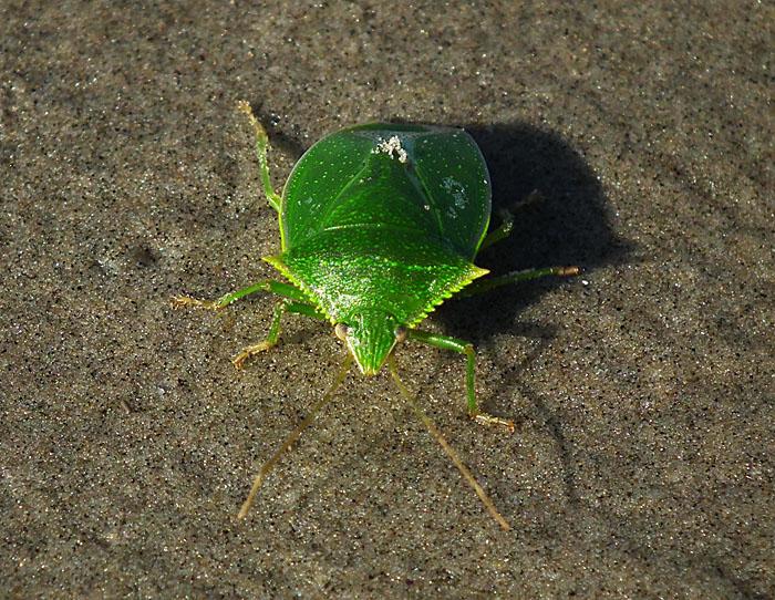 Foto van groene wants op het strand