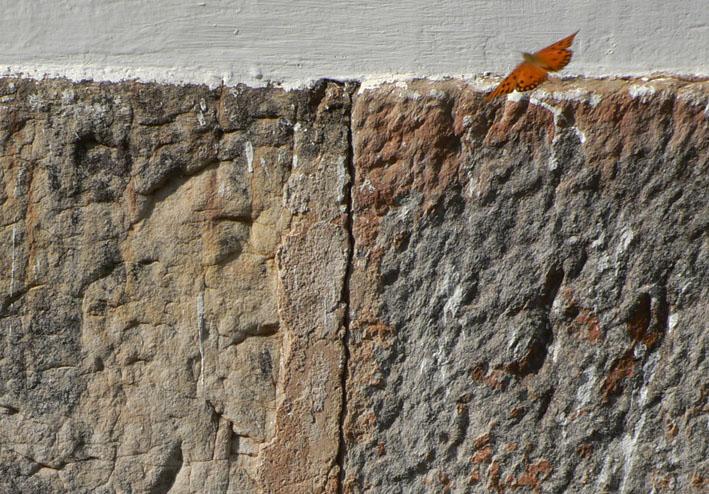 Foto vlinder bij ruwe muur