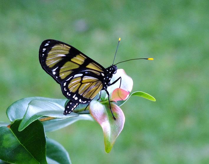 Foto vlinder op blad