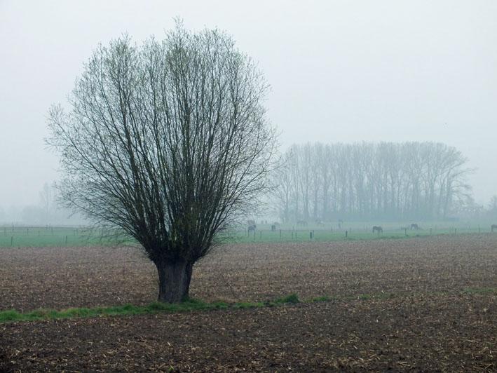 Foto boom in mistig landschap