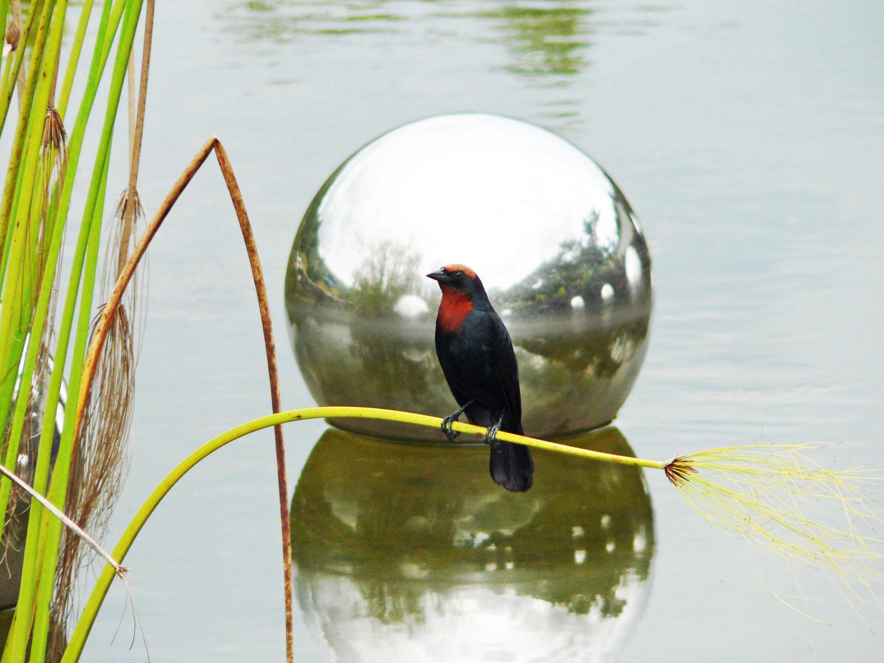Foto vogel op rietstengel voor glimmende, drijvende bol