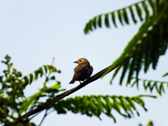 Foto vogeltje op stroomdraad tussen takken