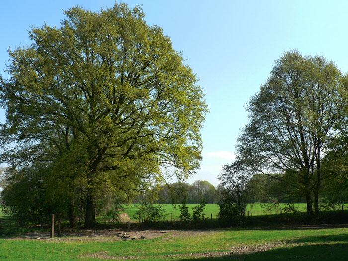 Foto bomen en weiland