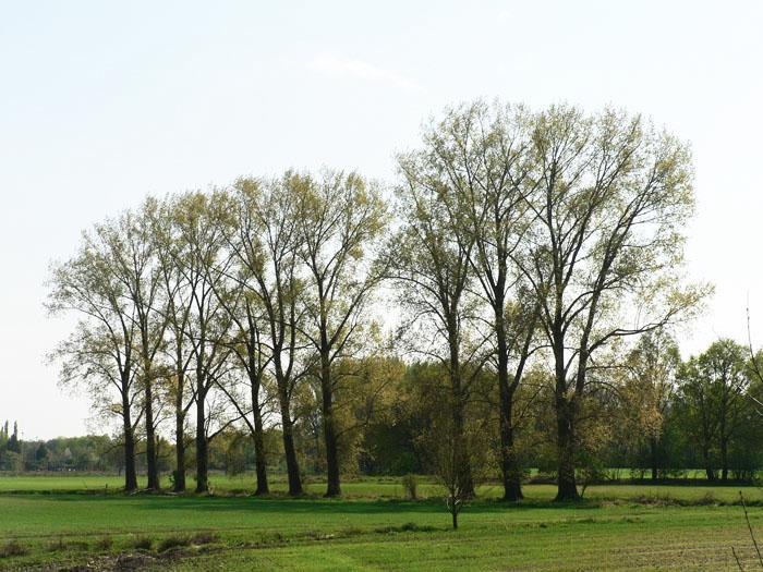 Foto bomenrij