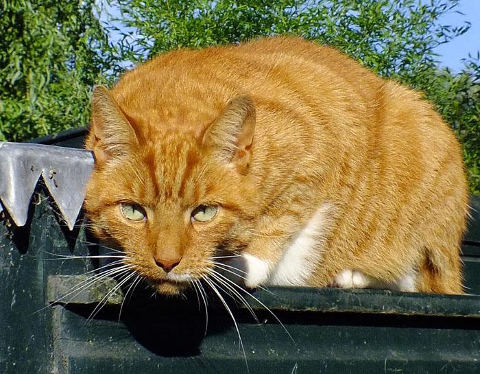 Foto kat die kijker aankijkt