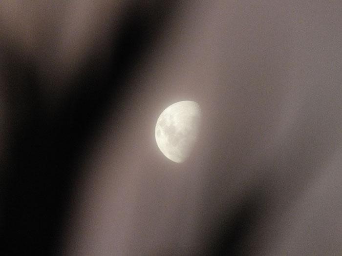 Fot maan tussen (onscherpe) takken