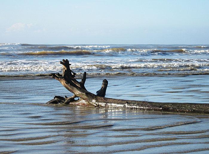 Foto van boomstam op het strand