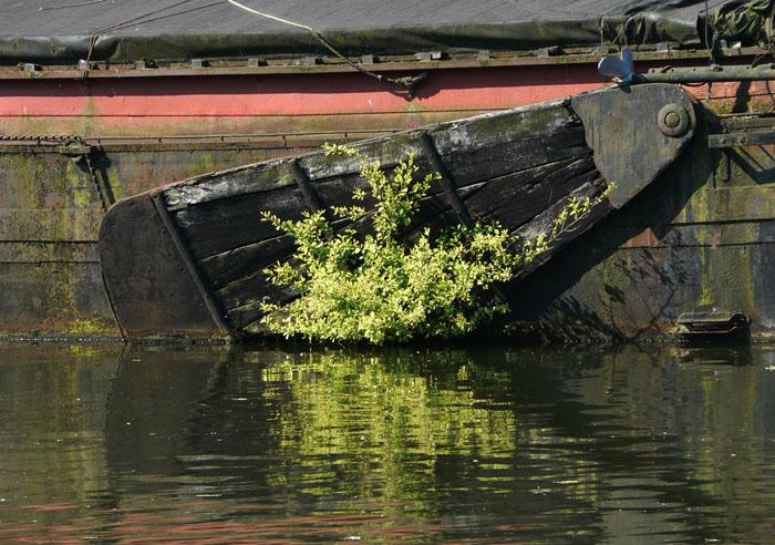 Foto zwaard van een boot met plant