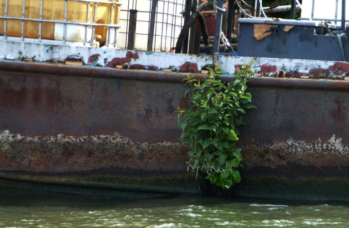 Foto van plant op roestige stalen boot