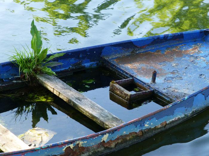 Foto van planten in volgelopen bootje
