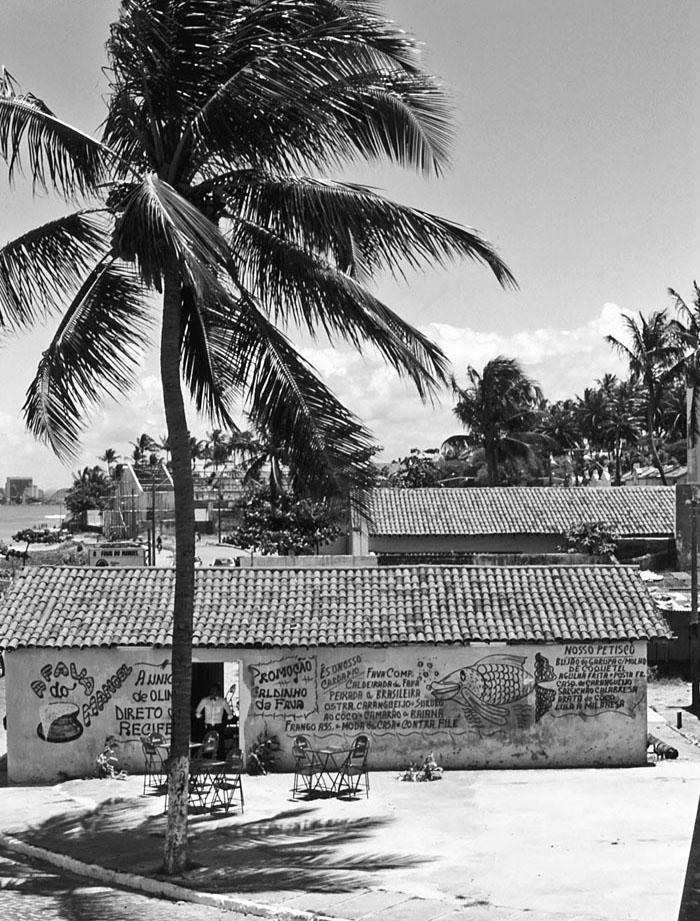Foto van een restaurant onder palmboom
