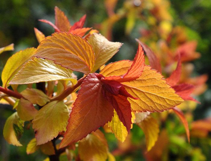 Foto plant met herfstachtige kleuren