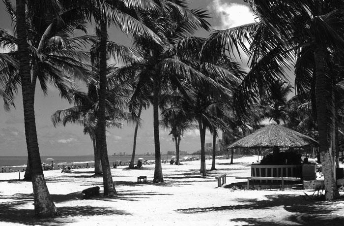 Foto strand met palmbomen bij Recife