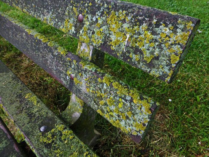 Foto van houten bank begroeid met mos