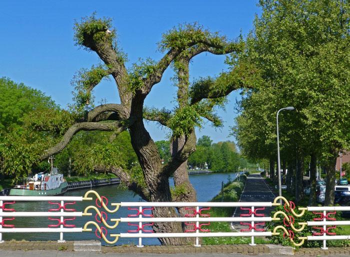 Foto van brug, kanaal en gesnoeide, grillige boom