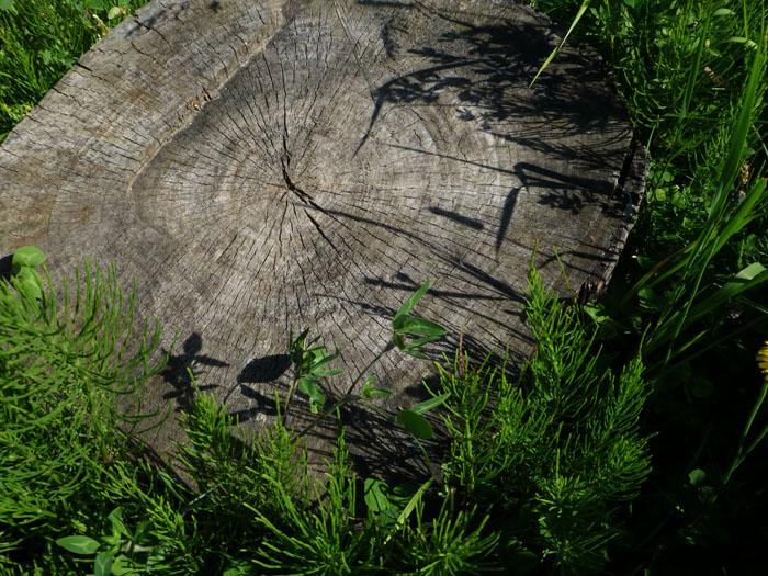 Foto van zaagvlak afgezaagde boom
