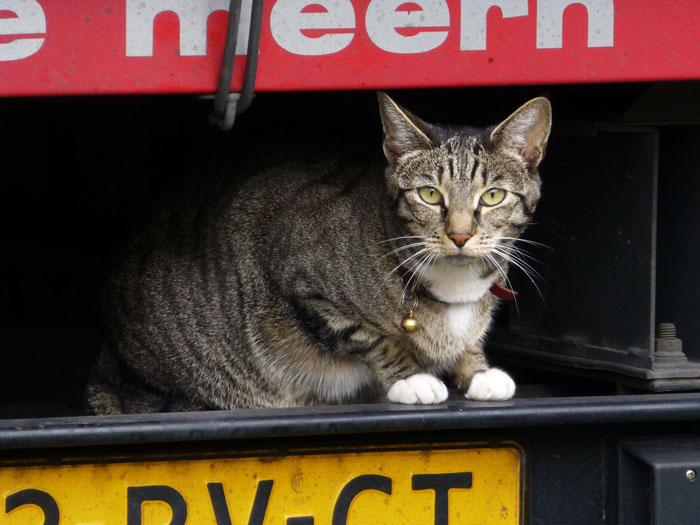 Foto van kat op auto