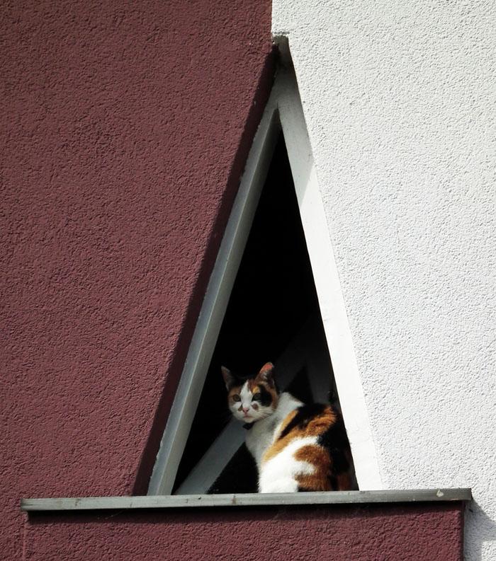 Foto van kat in driehoekig raam