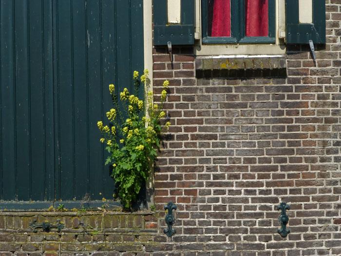 Foto van muur waarin een plant groeit
