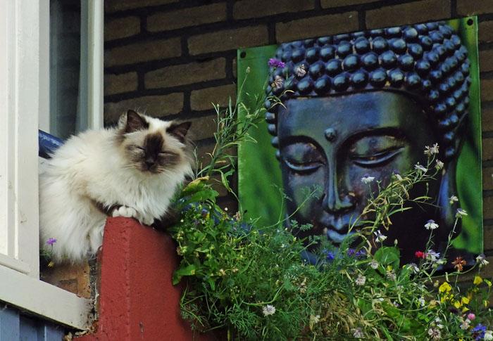 Foto van kat op balkon met planten en afbeelding Boeddha