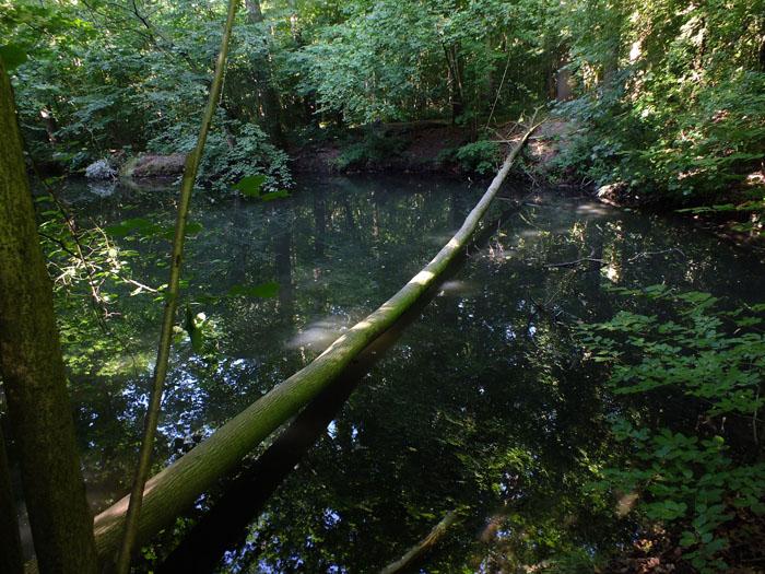 Foto van dunne boomstam, die een brug lijkt te vormen over water