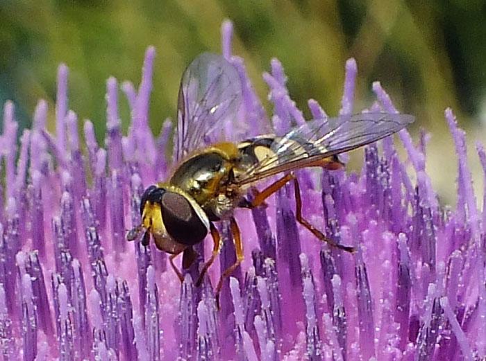 Close-up van insect op bloem