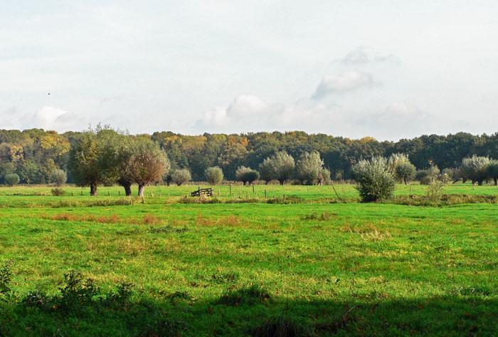Foto van weiland met op de achtergrond bomen