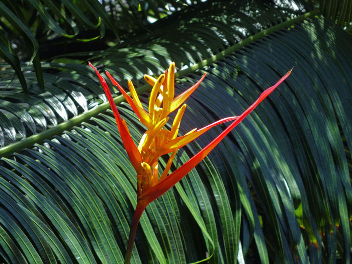 Bloem die tussen palmbladeren de kop opsteekt