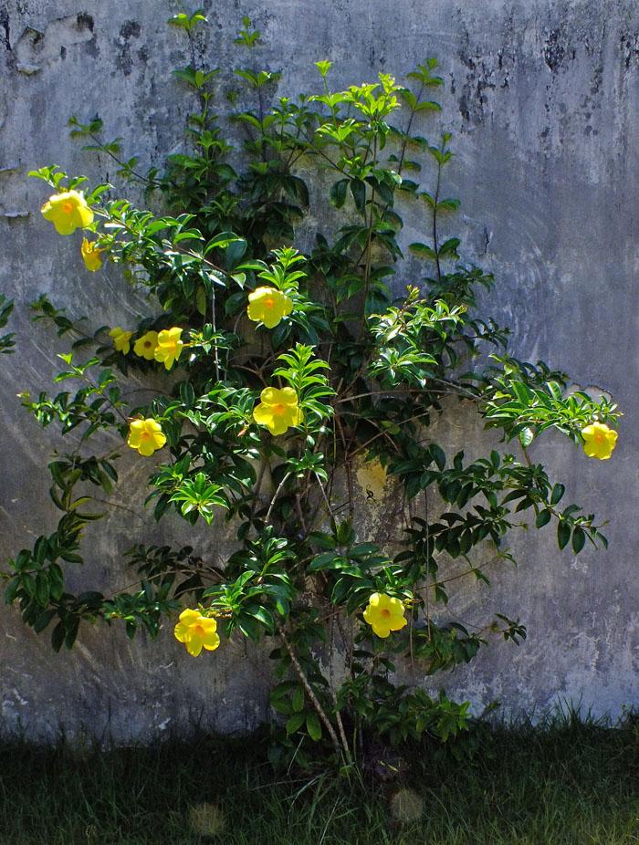 foto struik met gele bloemen