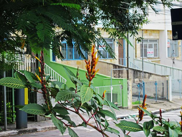 Foto van straat met boom, bloemen en hekken