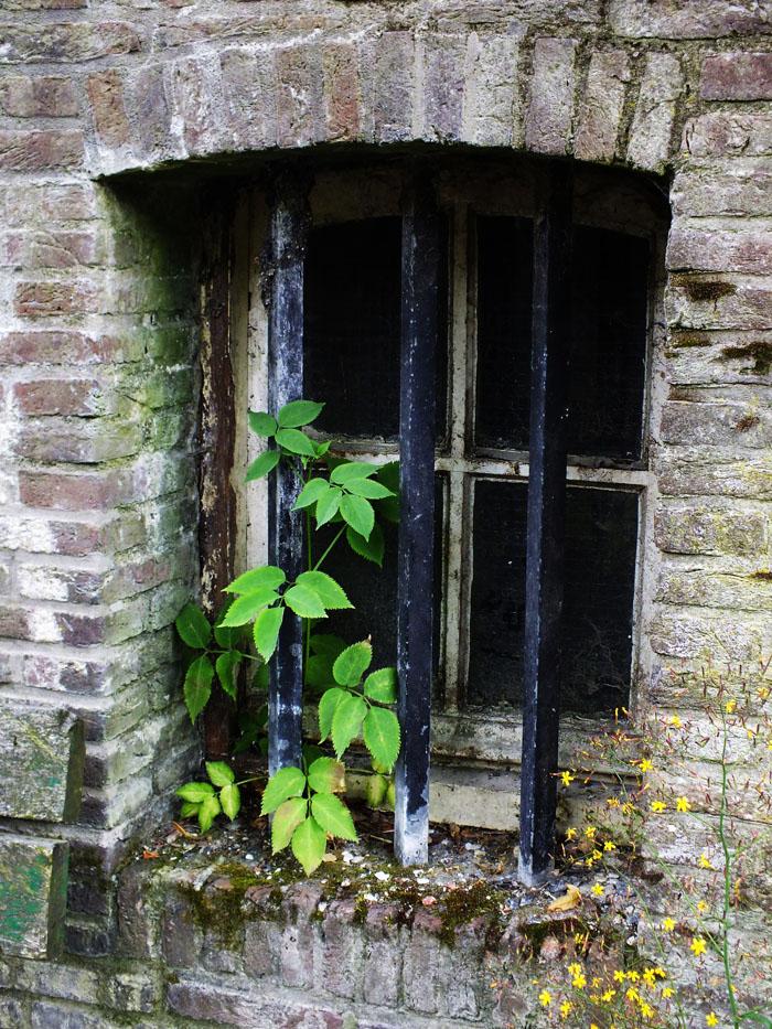 Foto van plant in raam van werfkelder Utrecht