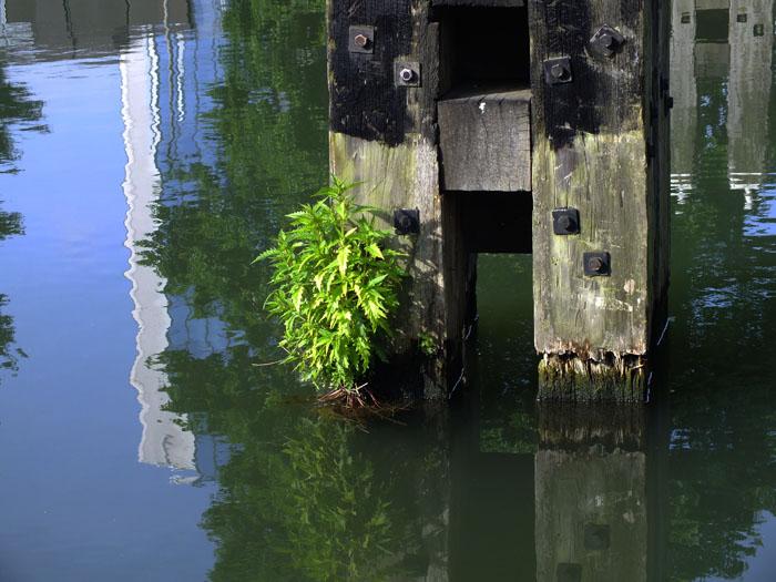 Foto van plant aan meerpaal
