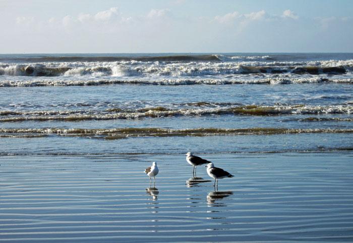 Fot van meeuwen aan de vloedlijn