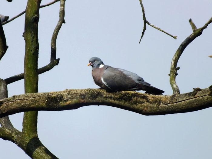 Foto van duif op tak