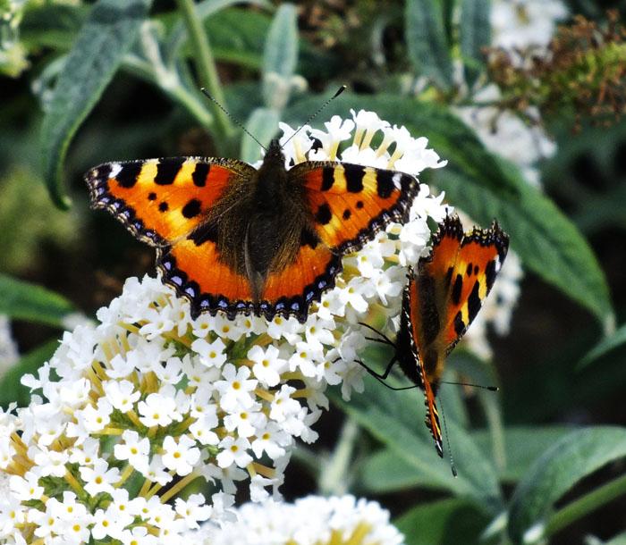 Foto van vlinders op bloem