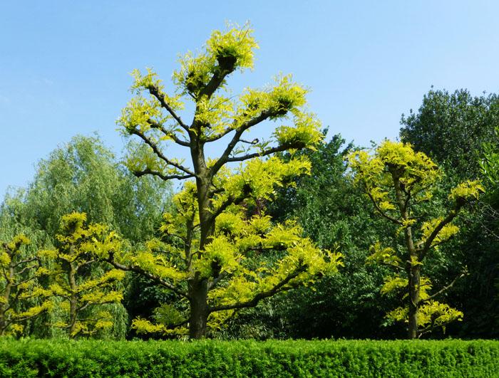 Foto van grillige bomen met lichtgroene bladeren