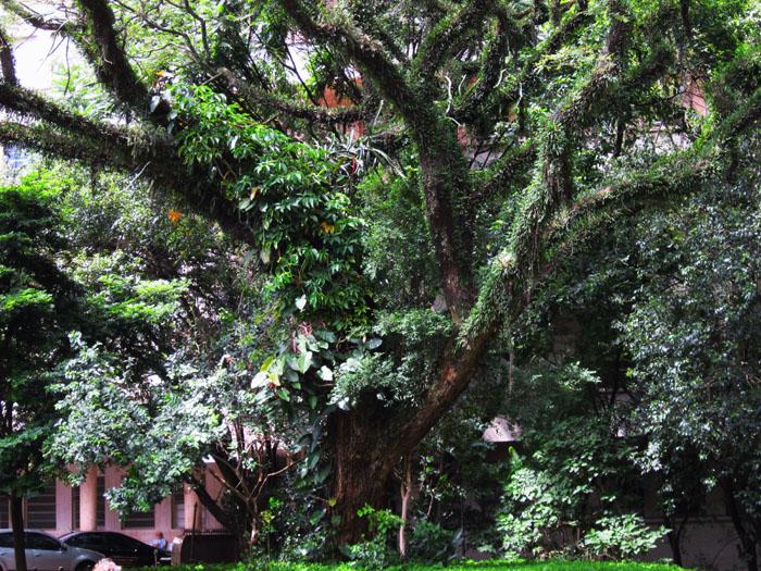 Foto van boom vol woekerende planten