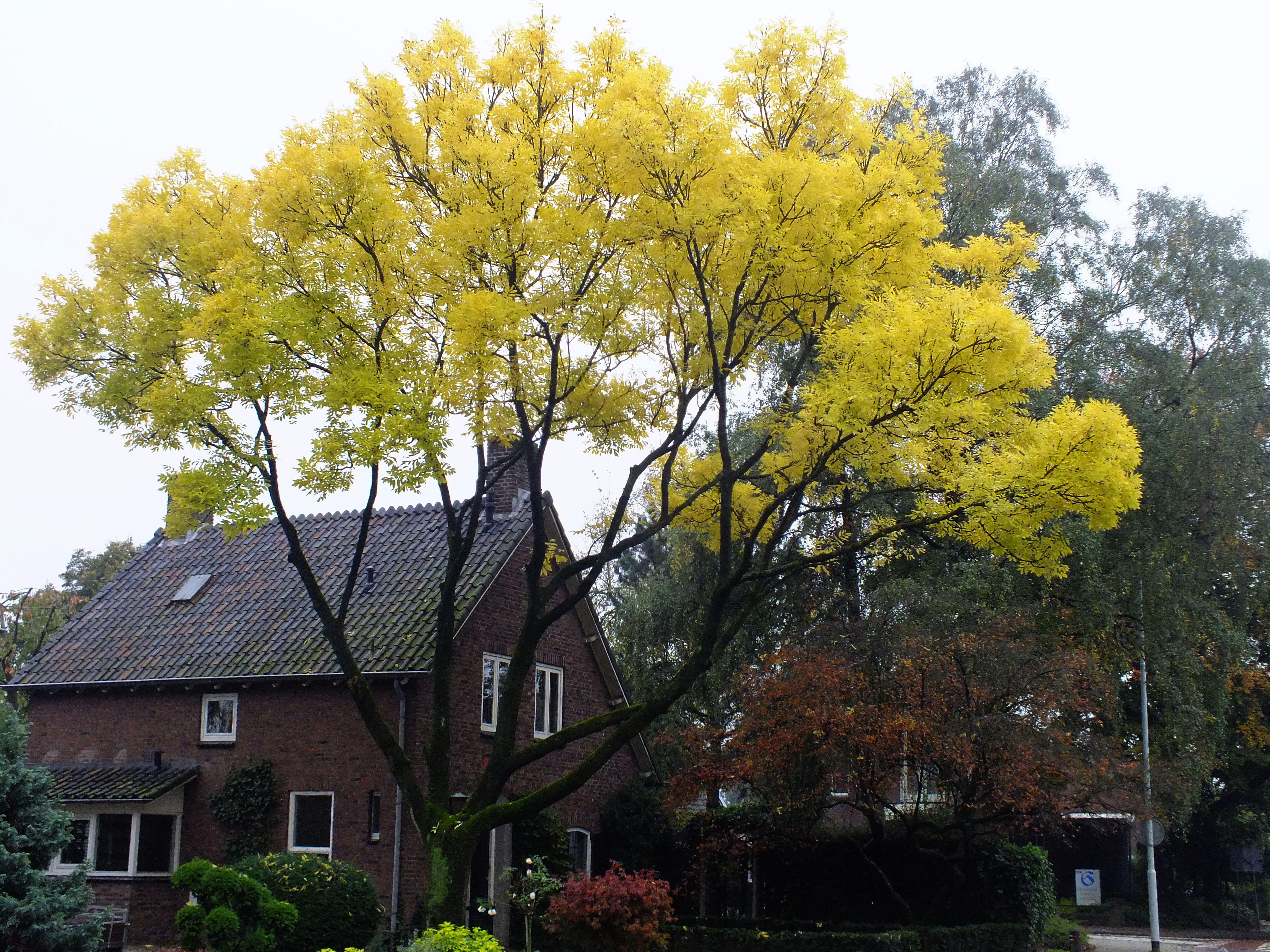 foto van boom met gele bladeren