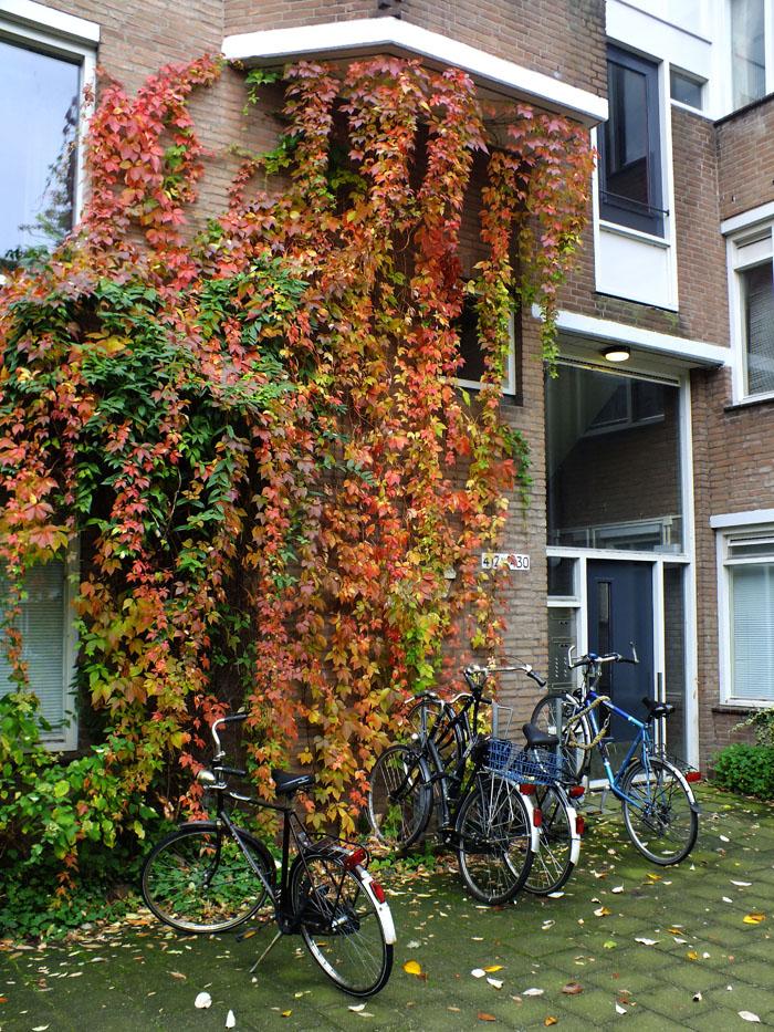 Foto van fietsen en herfstbladeren
