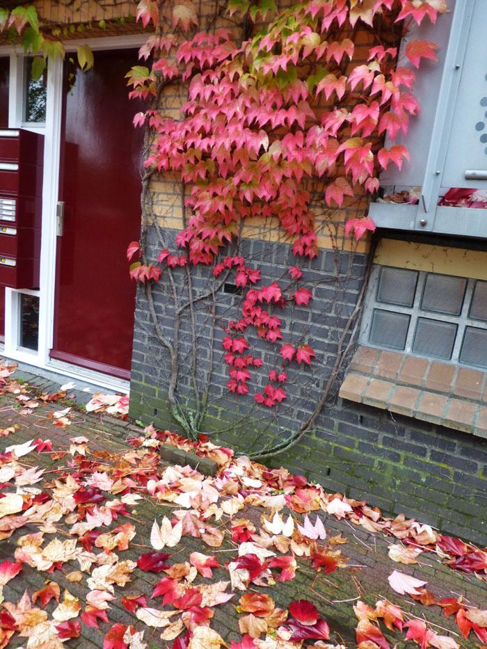 Foto van rode herfstbladeren aan muur en op de grond