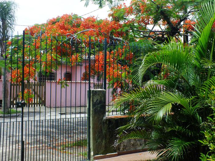 Foto van flamboyant en roze huis