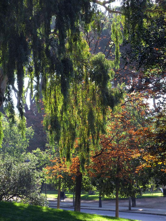 Foto van lichtval in bomen in park