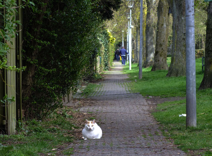 Foto van kat liggend op het wandelpad